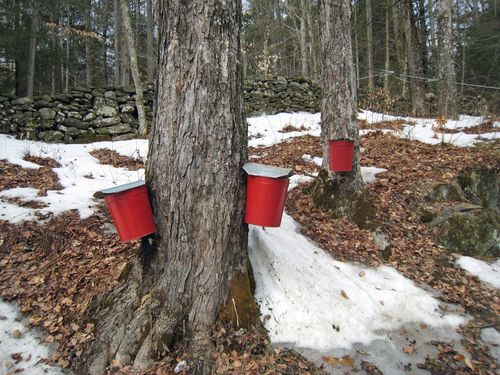Red Buckets
